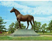 TOC Horse